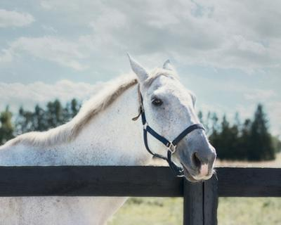 Polo Pony I by Elizabeth Urquhart