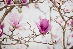Spring is In the Air II by Elizabeth Urquhart
