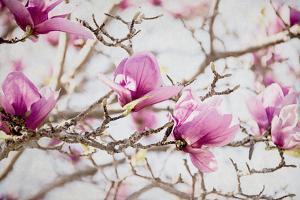 Spring is In the Air IV by Elizabeth Urquhart