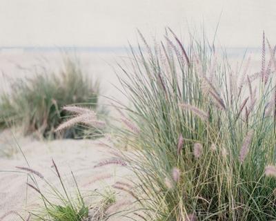 Steps To The Beach III by Elizabeth Urquhart