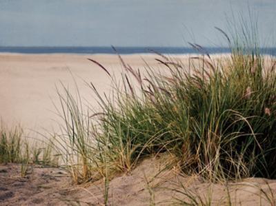 To The Beach II by Elizabeth Urquhart