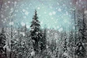 Winter Wonderland II by Elizabeth Urquhart