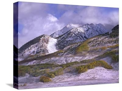 Elk Mountains with snow in autumn, Colorado-Tim Fitzharris-Stretched Canvas Print