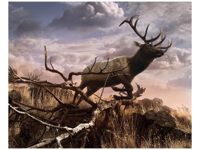 Elk Passage-Steve Hunziker-Art Print