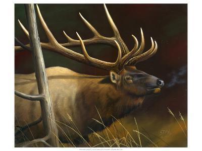 Elk Portrait II-Leo Stans-Art Print