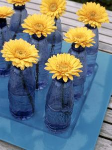 Yellow Gerberas in Blue Bottles by Elke Borkowski