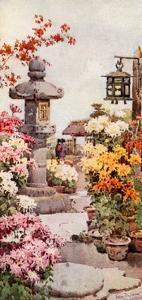 A Chrysanthemum Garden by Ella Du Cane