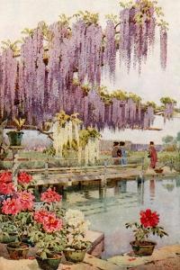 A Paeony Garden by Ella Du Cane