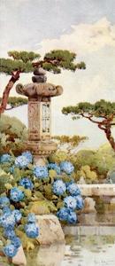 An Hydrangea Bush by Ella Du Cane