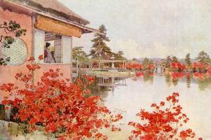 Azaleas, Nagaoka by Ella Du Cane