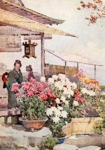Chrysanthemums by Ella Du Cane