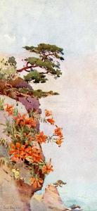 Lilies on the Rocks, Atami by Ella Du Cane