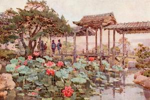 Lotus at Kodaiji by Ella Du Cane
