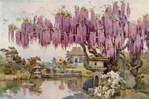 The Old Wistaria by Ella Du Cane