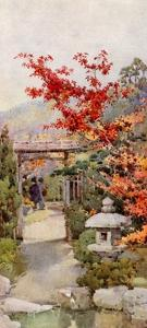 The Scarlet Maple by Ella Du Cane