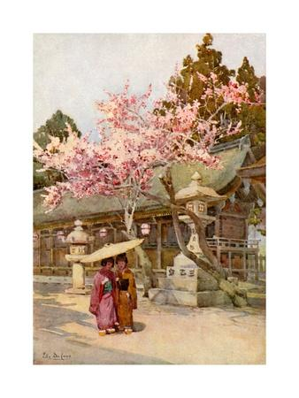 The Time of the Plum Blossoms