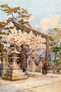 White Cherry at Kitano by Ella Du Cane