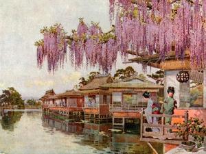 Wistaria, Nagaoka by Ella Du Cane