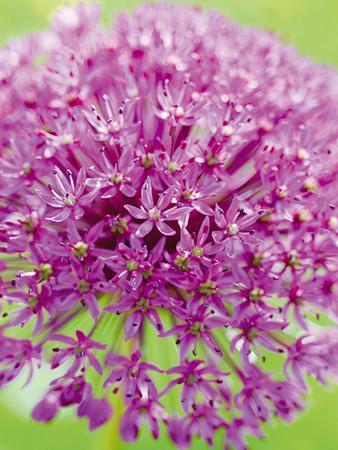 Flowerburst I