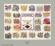 Navajo Dye Chart-Ella Myers-Art Print