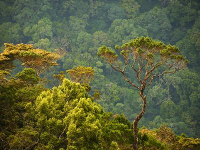 Horton Plain National Park Landscape, Sri Lanka