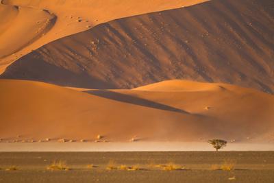 Namibia, Namib-Naukluft National Park, Sossusvlei. A dead camel thorn tree