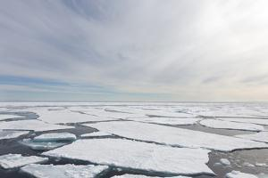 Norway, Svalbard, Pack Ice, Pack Ice by Ellen Goff