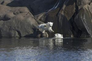 Norway, Svalbard, Polar Bear and Cub Coming Off Rocks to the Ocean by Ellen Goff