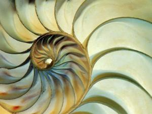 Close-up of Nautilus Shell Spirals by Ellen Kamp