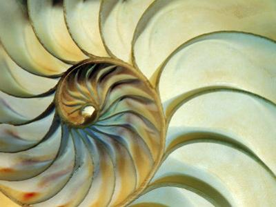 Close-up of Nautilus Shell Spirals by Ellen Kamp
