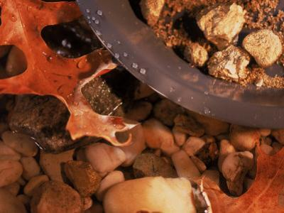 Gold Nuggets and Dust in Pan by Rocky Stream