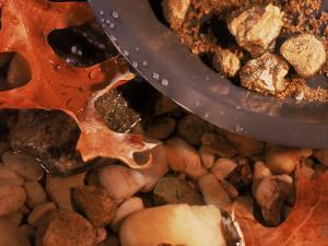 Gold Nuggets and Dust in Pan by Rocky Stream by Ellen Kamp