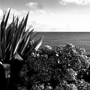 Plants by Garrans Bay, Cornwall, UK by Ellen Kamp
