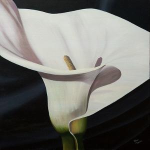 Black Tie Lily by Ellen Macioce
