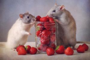 Strawberries by Ellen Van Deelen