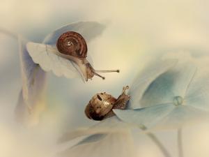 Snails by Ellen Van