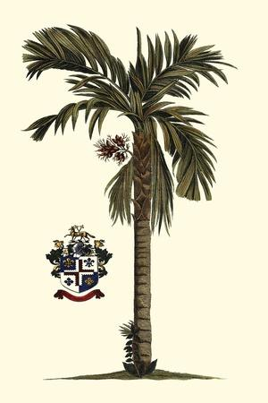 https://imgc.artprintimages.com/img/print/elongated-exotic-palm-ii_u-l-q1bgnj60.jpg?p=0