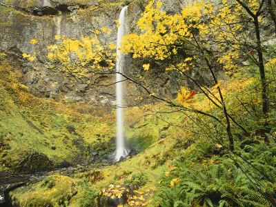 Elowah Falls in Autumn, Columbia Gorge National Scenic Area, Oregon, USA-Stuart Westmoreland-Photographic Print