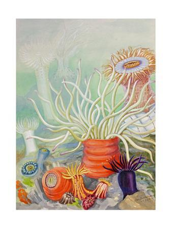 A View of Poisonous Sea Anemones by Else Bostelmann