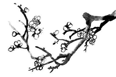 Chinese Black And White Traditional Ink Painting, Plum Blossom On White Background