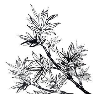 Chinese Traditional Ink Painting, Bamboo On White Background by elwynn