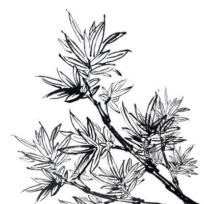 Chinese Traditional Ink Painting, Bamboo On White Background