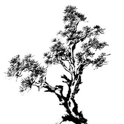 Chinese Traditional Ink Painting, Pine Tree On White Background