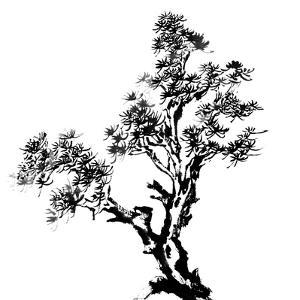 Chinese Traditional Ink Painting, Pine Tree On White Background by elwynn