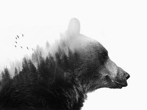 Big Bear by Emanuela Carratoni