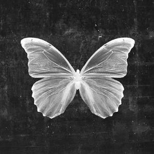 Butterfly In Black by Emanuela Carratoni