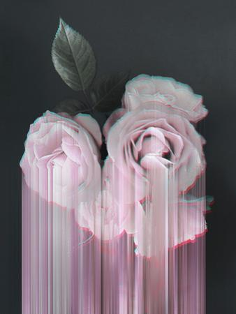 Fall In Rose by Emanuela Carratoni