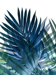 Palms Leaves by Emanuela Carratoni