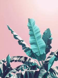 Pink Jungle by Emanuela Carratoni