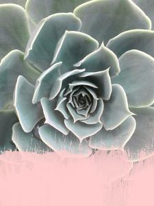 Pink On Succulent by Emanuela Carratoni